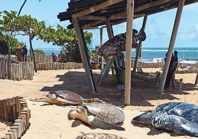 Pontos turísticos de Praia do Forte